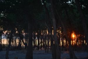 camping prep 020