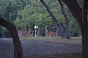 deer in velvet, chicken enchiladas, picadillo, sorghum 087