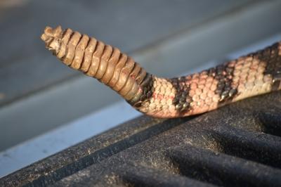 jerky, rattlesnake, roasting pumpkin 014